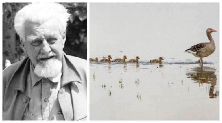Konrad Lorenz and the Study of Animal Behavior