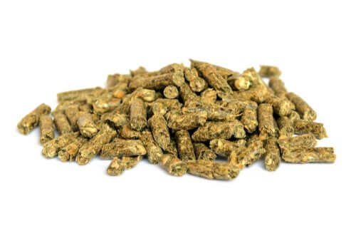 A picture of rat feed, important for rat care.