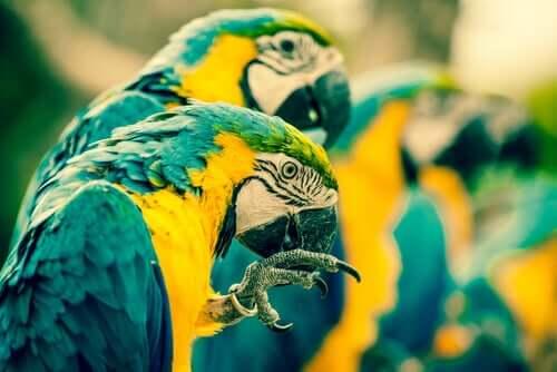 Lice in birds.