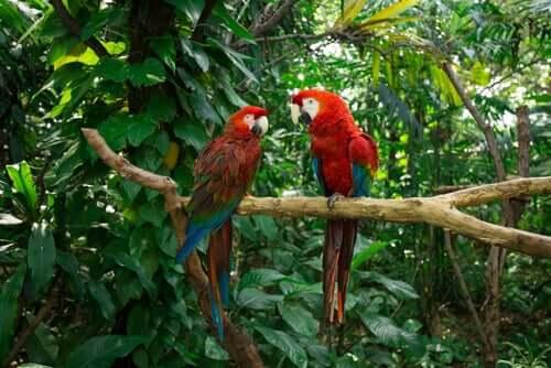 Environmental Enrichment for Pet Parrots