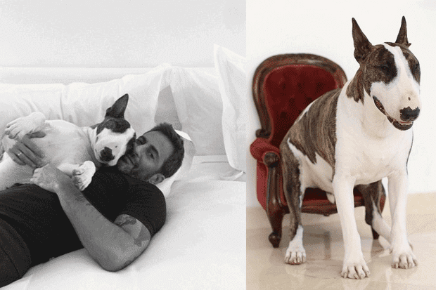 Marc Jacobs and his dog, Neville Jacobs.