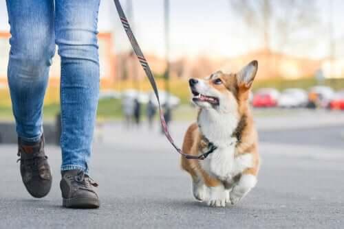 An owner walking a dog during coronavirus quarantine.