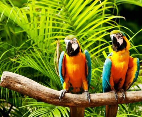 Two pet parrots sitting on a branch.