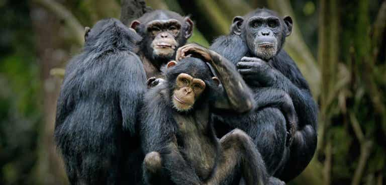 The Primate Species: Our Closest Relatives
