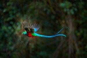 A bird in flight.