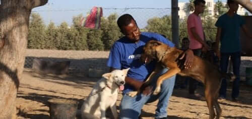Two rescued dogs in the sanctuary.