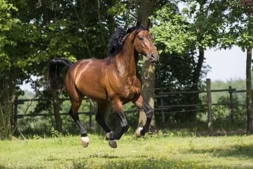 The Origins of the Maremmano Horse Breed