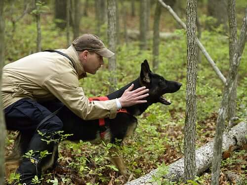 The Importance of Canine Training and Education
