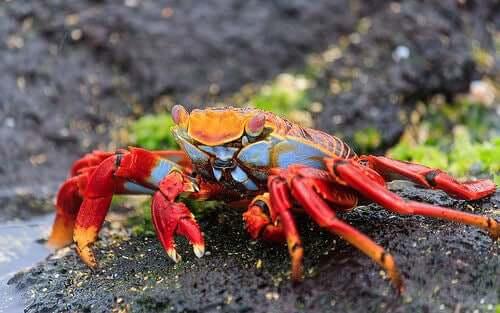 Some Amazing Species of Crustaceans