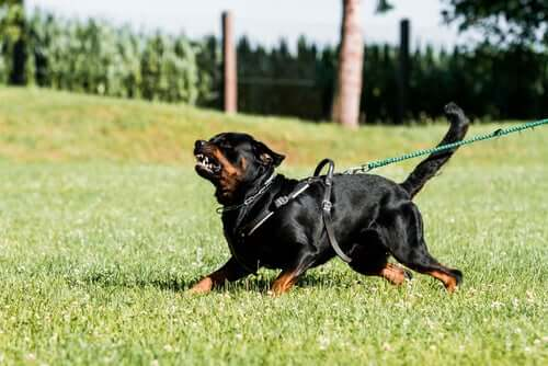 Defense and Attack Training in Dogs