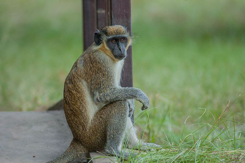 A green monkey sitting on a step.