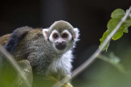 A monkey climbing on a tree.