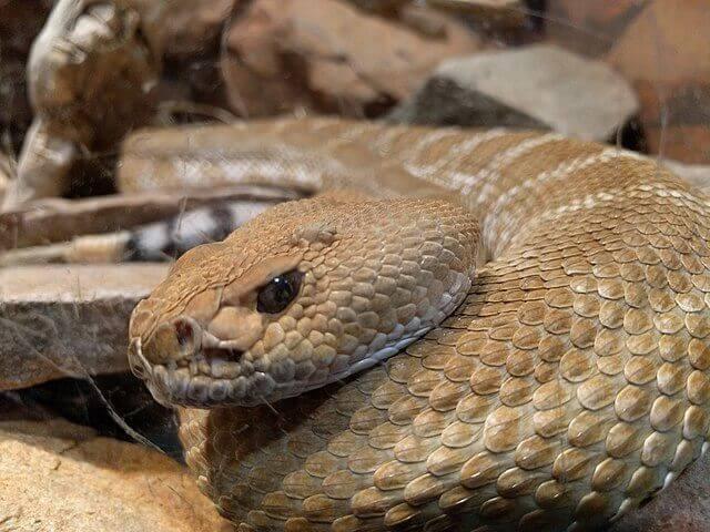 Snakeskin Shedding Problems