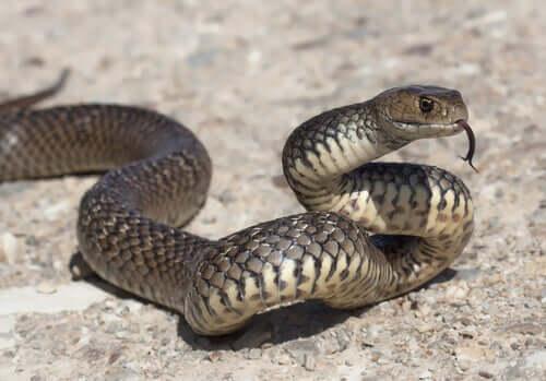 A snake outside.