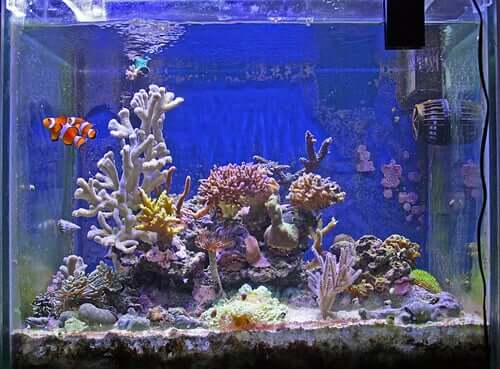 An well-decorated aquarium.