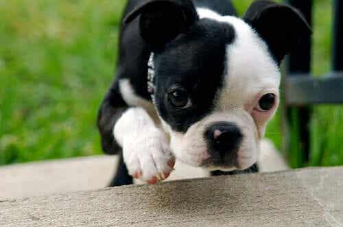 Fading Puppy Syndrome: Beware of Dehydration