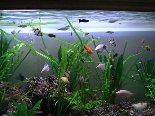 How to Choose Plants for Your Aquarium
