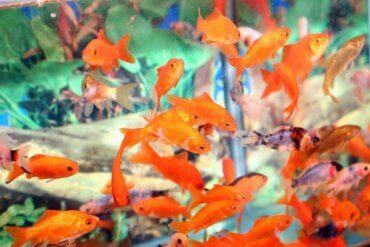 Common Aquarium Problems