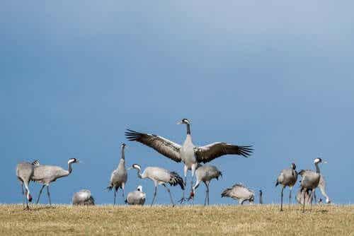 6 Fascinating Migratory Birds