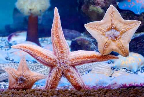 Starfish in an aquarium.