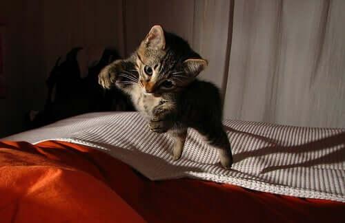 A kitten pouncing.