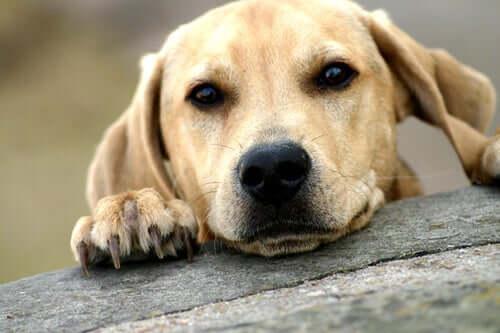 A dog posing.