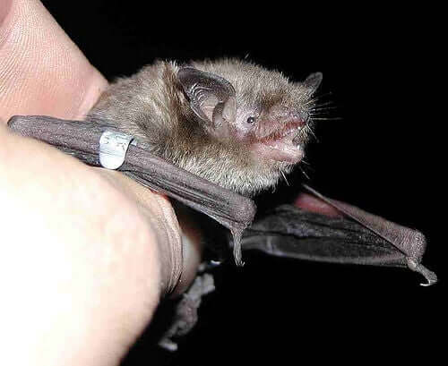 A picture of someone holding a bat.
