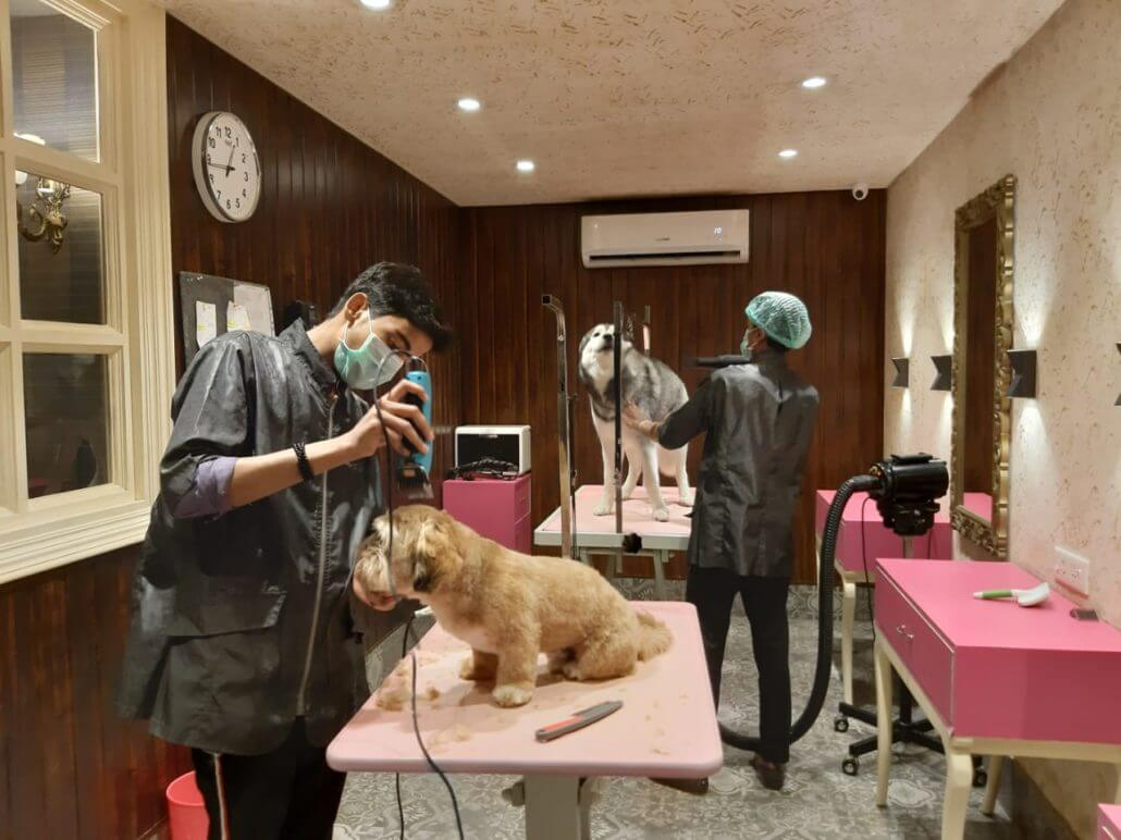 Grooming at the Critterati dog hotel.
