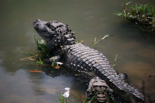5 Animals That Live in Swamps