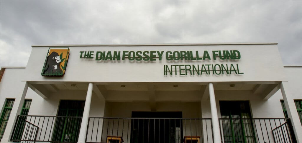 Who Was Dian Fossey?