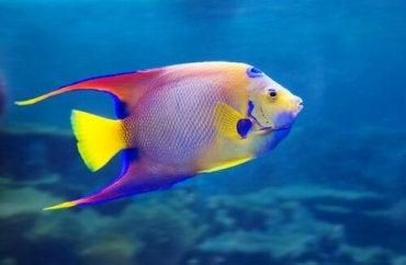 8 Amazing Freshwater Fish