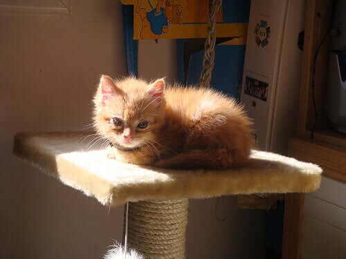 Cat Scratching Posts and Other Accessories