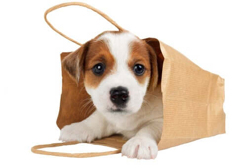 Should You Carry Your Dog in Your Bag?