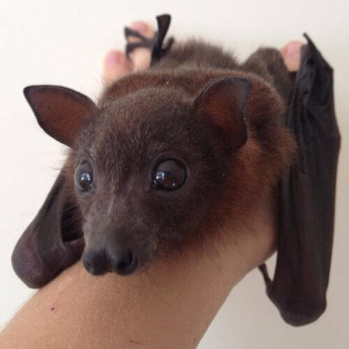 A bat being held.
