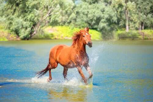 A horse galloping through water.