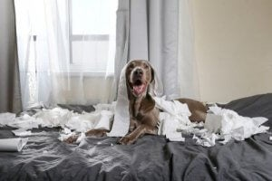 Hyperactivity in Pets: How to Handle Lockdown