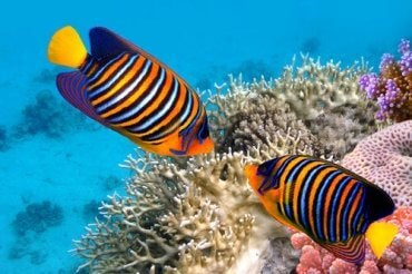 5 Interesting Facts About Tropical Fish