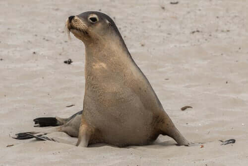 A sea lion on the beach.