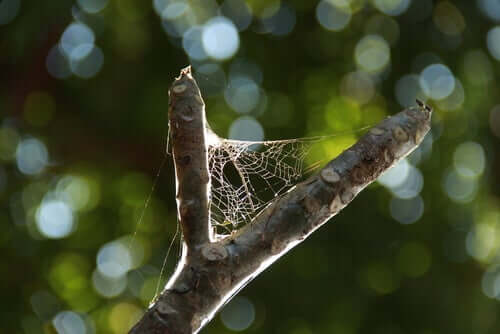 A web between two branches.