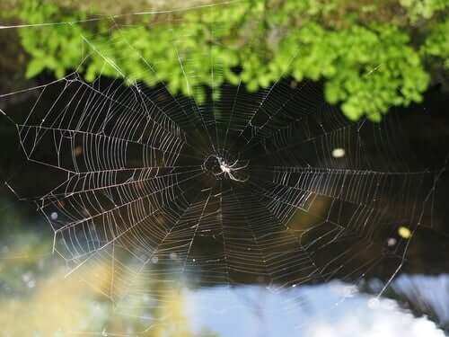 How Spider Webs Are Made
