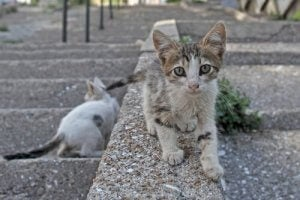 Is It Illegal to Give Food to Stray Cats?
