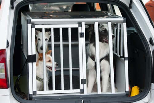Learn How to Travel with a Pet Carrier