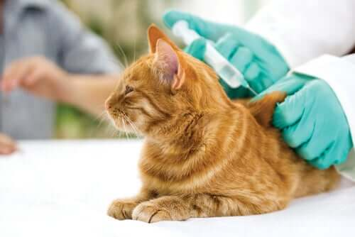 Cat Vaccines: All You Need to Know