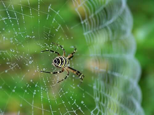 A close up of a spider on a web.