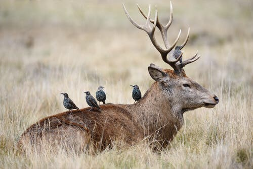 All About Symbiosis in Animals