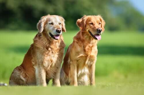 All You Need to Know About Canine Brucellosis