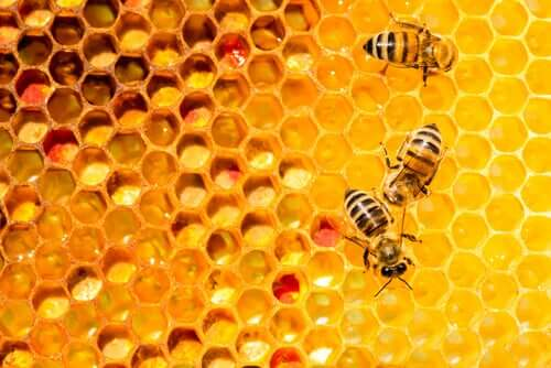 A beehive.