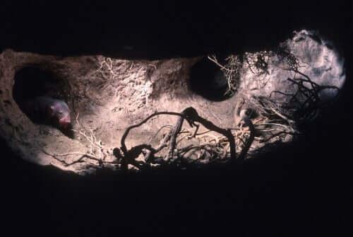 A mole burrowing.