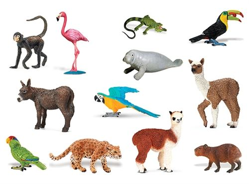 Some animals that live in South America.