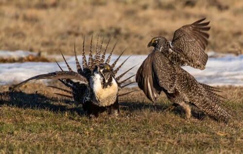 Animals performing a mating dance.